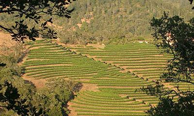 Napa Valley Nested AVAs